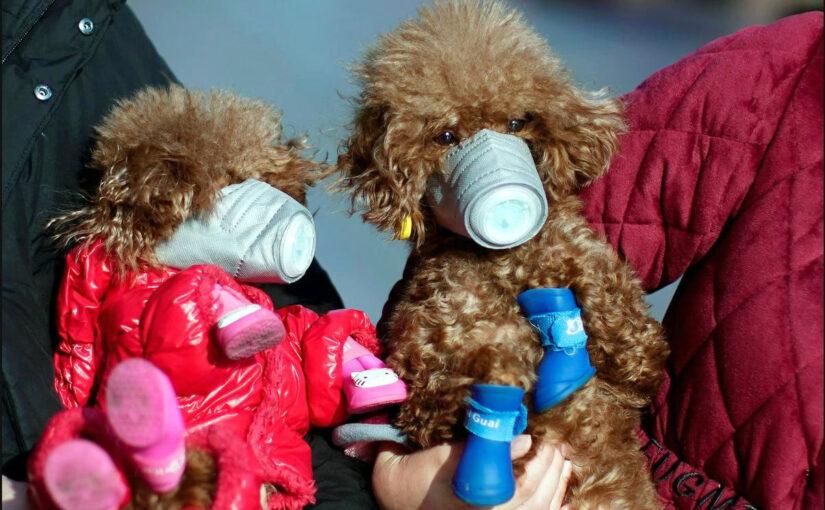 Mascotas protegidas contra el virus